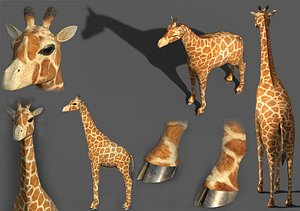 realistic giraffe model