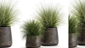3D ornamental pots grass
