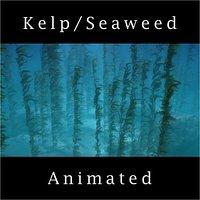 Seaweed Kelp Animated