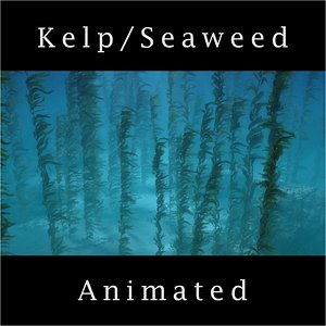 photorealistic seaweed 3D model