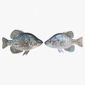 3D Crappie Fish model