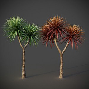 3D XfrogPlants Cabbage Tree - Cordyline Australis