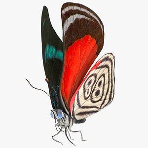 Animated Diaethria Clymena Flight Rigged for Cinema 4D 3D