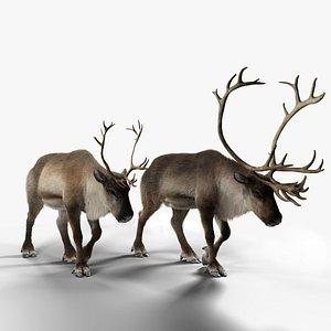 reindeer animation female male 3D