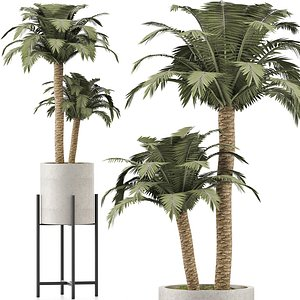 3D model palms plant beach