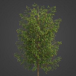 2021 PBR Broad Leaved Linden Collection - Tilia Platyphyllos 3D