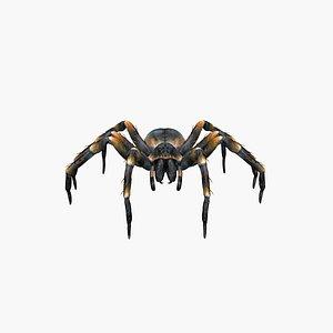 3D Spider Tarantula model