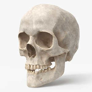 3D human skull pbr -