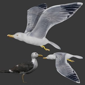 Fully rigged two versions of seagull 3D model