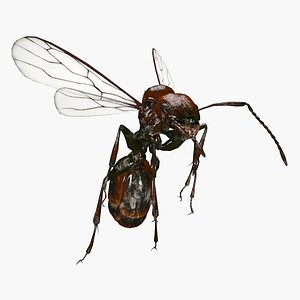3D bug insect nature model