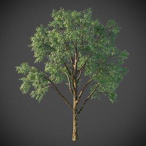 XfrogPlants Southern Bluegum - Eucalyptus Globulus 3D model