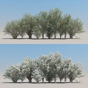 summer olive tree 3D model