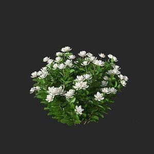 3D XfrogPlants Gardenia - Gardenia Jasminoides