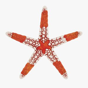 starfish fromia monilis 3D model