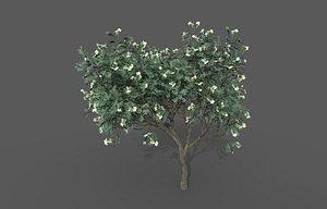 3D Tea Tree model