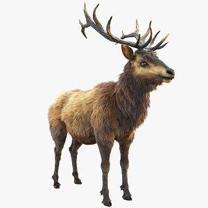 deer stag elk 3D