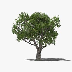 3D model Cork Oak