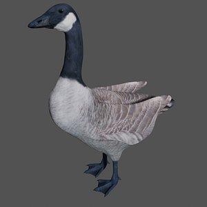 3D Canadian Goose model