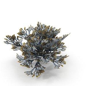 Egg Wrack seaweed V1Egg Wrack seaweed V1 model