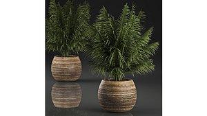 basket palm model