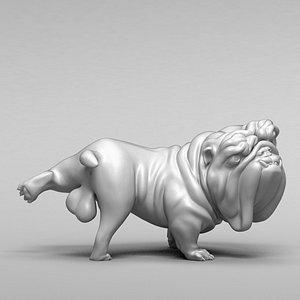 dog bulldog english model