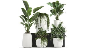 3D model plants white flowerpots