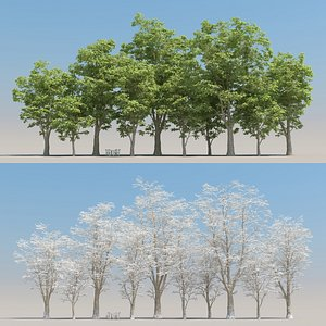 5 platanus tree leaves 3D model