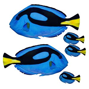 Fully rigged low poly Blue tang 3D model