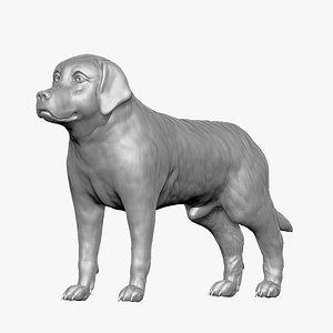 Labrador Retriever02 3D model
