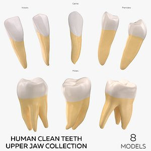 3D model Human Clean Teeth Upper Jaw Collection - 8  models