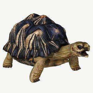 radiated tortoise obj