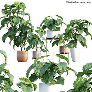 3D Philodendron subincisum