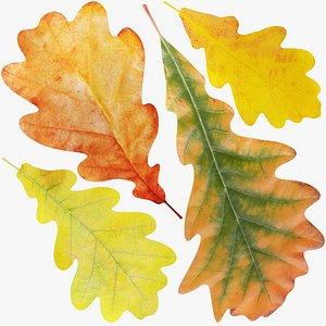 Oak Leaves Collection V1 3D model