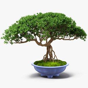Small Bonsai Tree in Pot Fur model