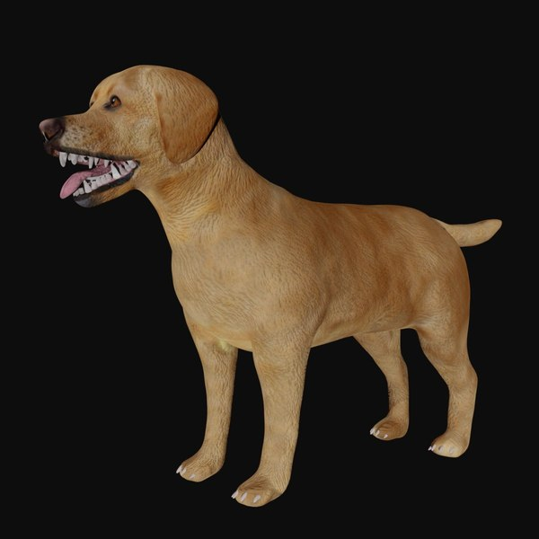 Warning: What Can You Do About Labrador Coat Care Right ...