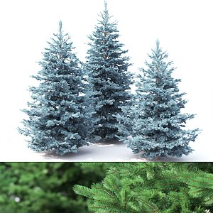spruce tree nature 3D model