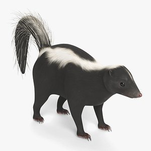3D skunk animal mammal model