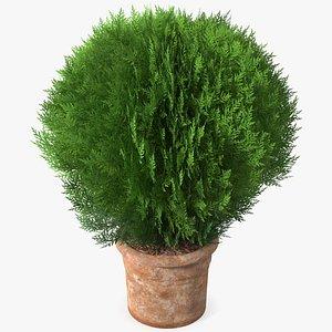 3D Platycladus Pot Plant