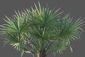 3D XfrogPlants Bismarck Palm - Bismarckia Nobilis