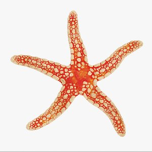 3D necklace starfish rig