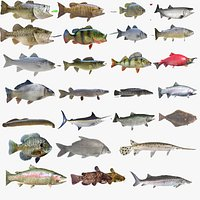 Fish Collection Vol 4