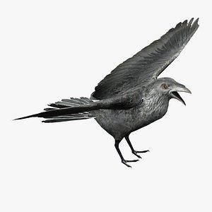 Black Crow 3D model