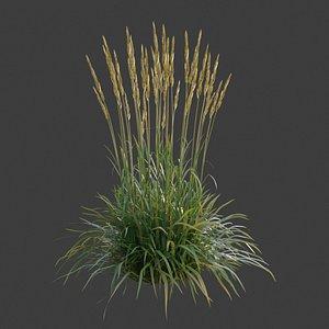 3D XfrogPlants Feather Reed Grass - Calamagrotis Acutiflora