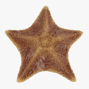 bat starfish 3D