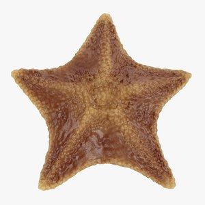 bat starfish 3D