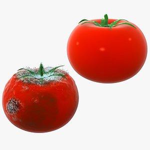 3D model tomato rotten fungus