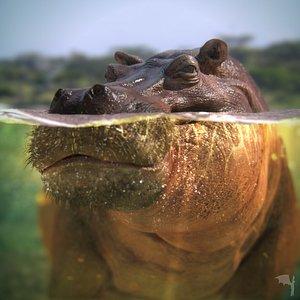 hippopotamus model