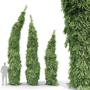 Picea Omorika Bruns 01 3D model