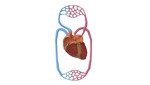 3D Heart with Veins