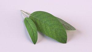 sage plants food spices 3D model
